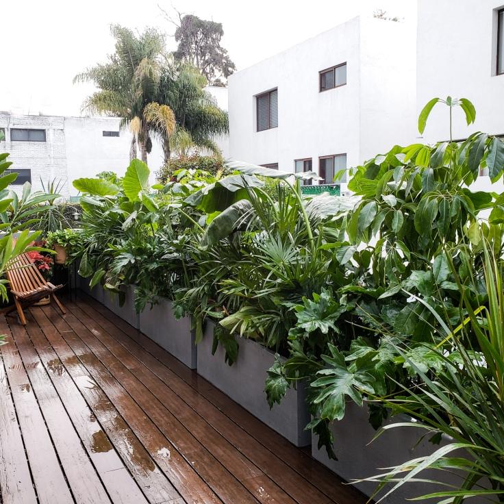 macetas tipo concreto con selva en ellas